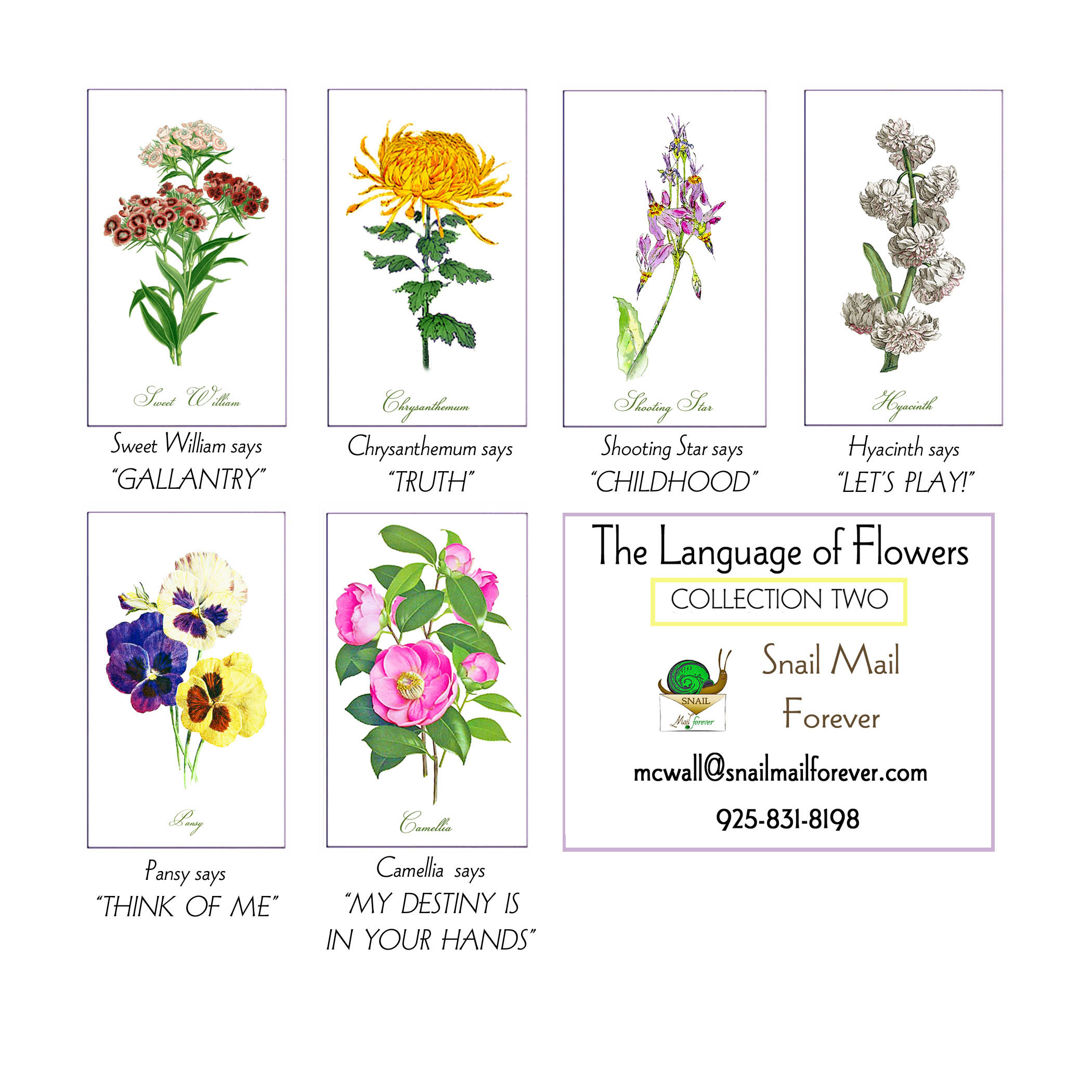 Language of Flowers 5x7 Cards blank inside Meaning of flower stated on back