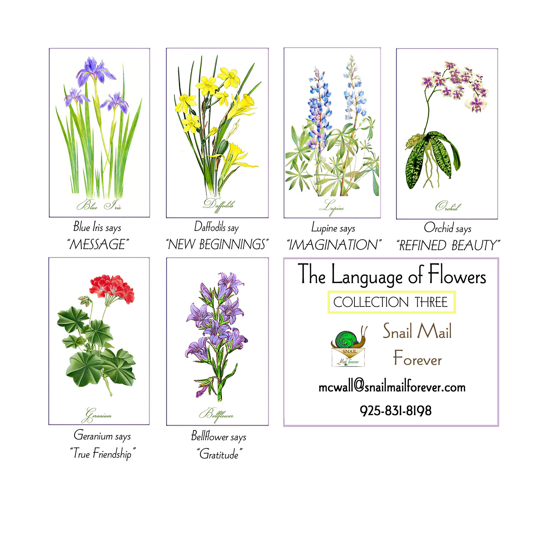Flower Meanings: Language Of Flowers 5x7 Cards